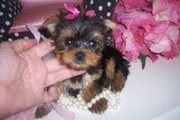 CUTE MALE AND FEMALE YORKIE PUPPIES FOR REHOMING