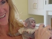capuchin monkeys for rehoming for their new home