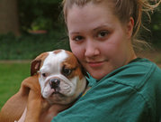 outstanding English bulldog puppies available for free adoption.